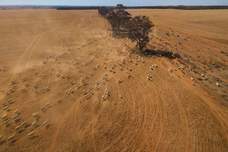 WA MIXED-FARMING ENTERPRISE - Image 2