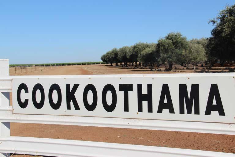COOKOOTHAMA VINEYARD, 9430 Murrumbidgee River Road Willbriggie NSW 2680 - Image 2