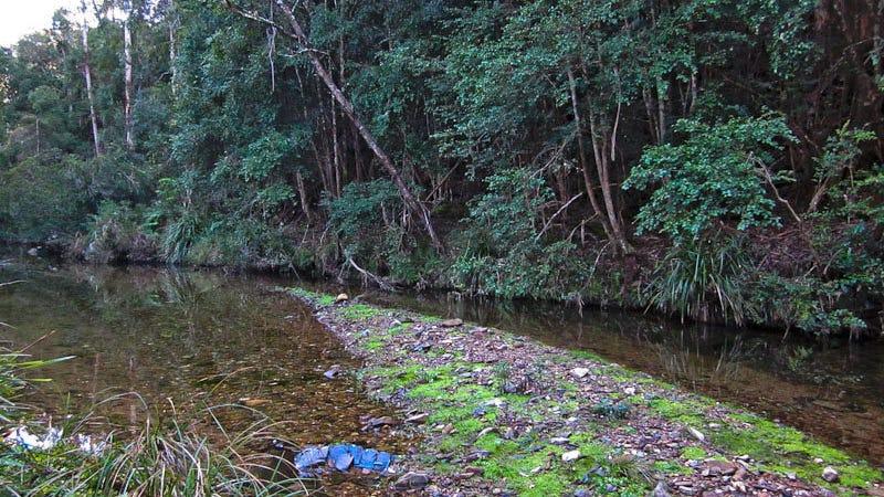 Dignams creek