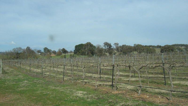 1745 Murrumbateman Road, Gundaroo, NSW 2620
