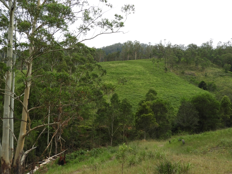 Pipeclay Road, Kindee, NSW 2446