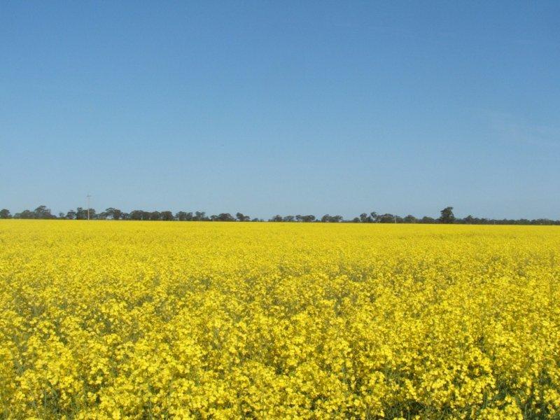591 Warrangoon Siding Road, Mulwala, NSW 2647