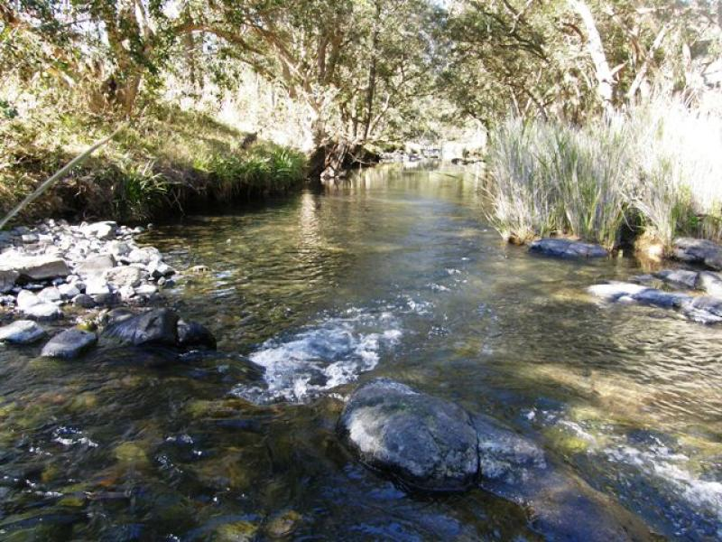 6458 Gwydir Highway, Cangai, NSW 2460