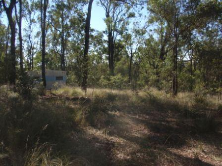 null, Wattle Camp