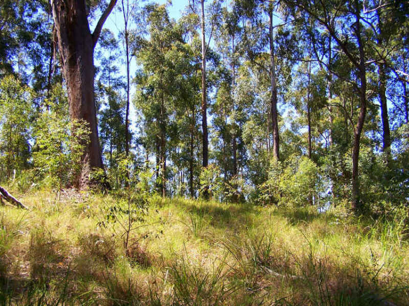 Lot 159 Batar Creek Road, Kendall, NSW 2439