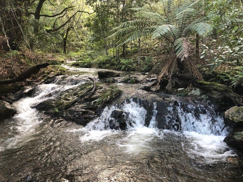 1097 Deer Vale Road, Deer Vale, Dorrigo, NSW 2453