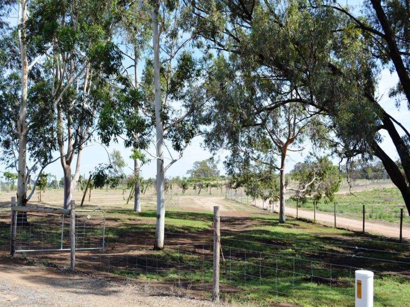 2 Williamsville Road, Curlwaa, NSW 2648