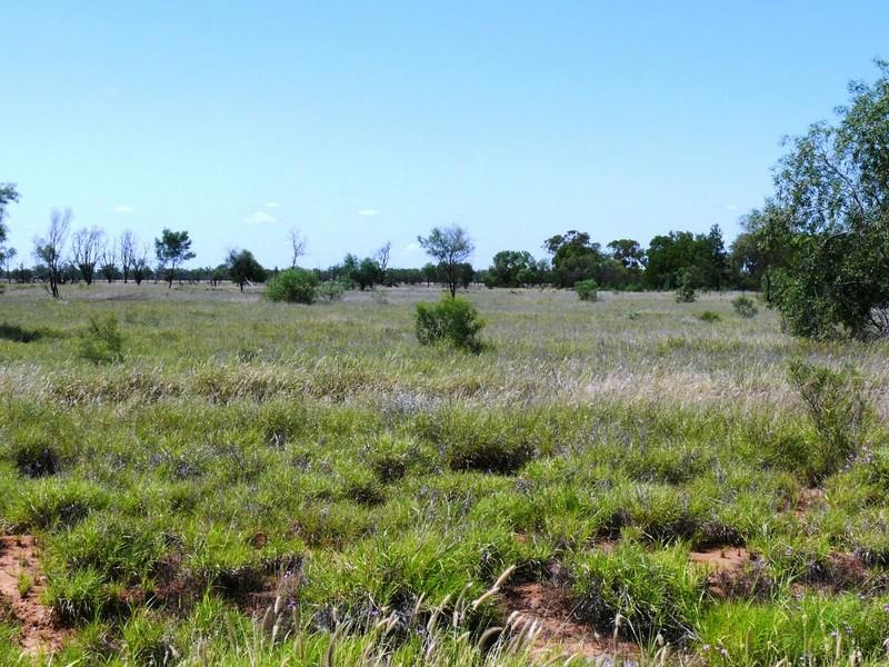 Lot 9 Willowthal Road, St George, Qld 4487