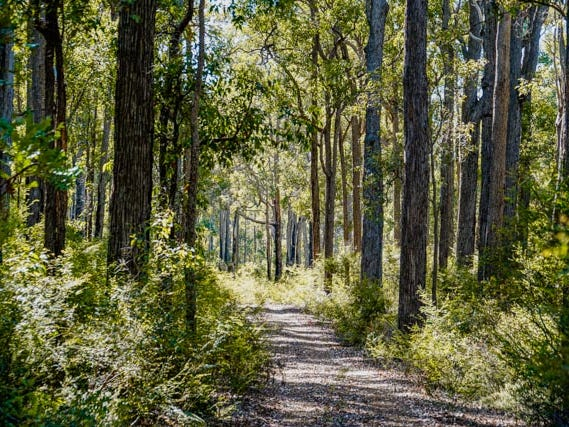 Lot 2147 Corbett Road, Wellington Forest, WA 6236