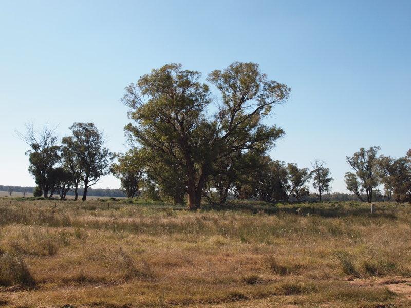 - Pine Glen, West Wyalong, NSW 2671