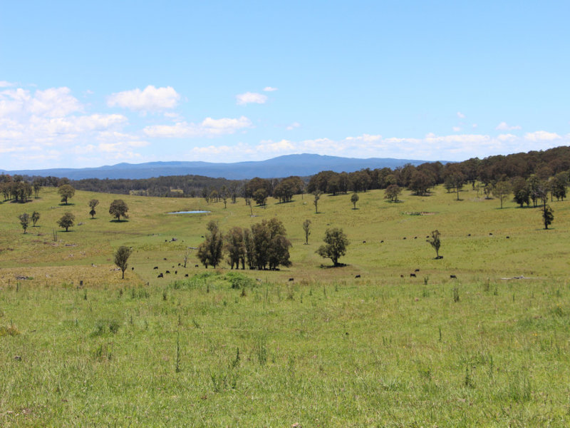 "161 ""Forest Lodge"", Hickey's Road, Wongwibinda, NSW 2350"