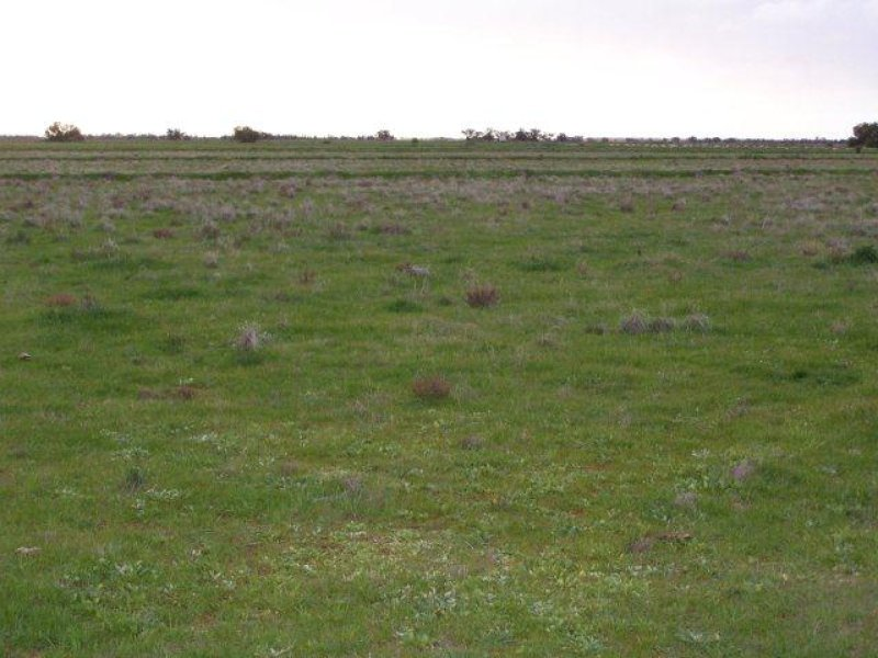 . Farm 564, Coleambally, NSW 2707