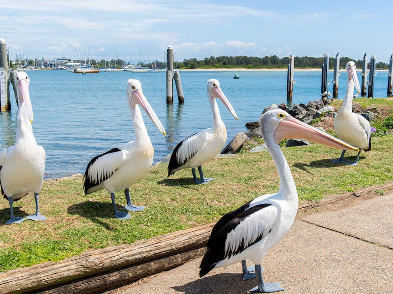 Lot 368 Meares Cct, Stirling Green, Port Macquarie, NSW 2444