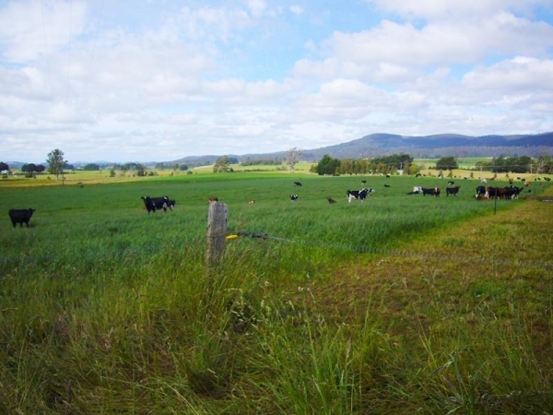 33205 Tasman Highway, Legerwood, Tas 7263