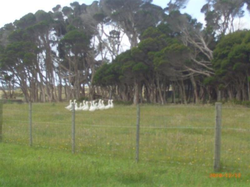 429 Coast Road, Lady Barron, Tas 7255