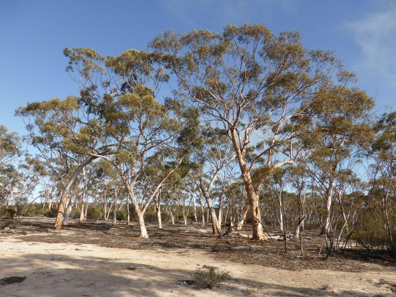 Lot 1395 Westonia Road, Bodallin, WA 6424