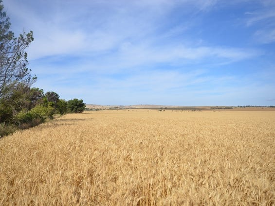 Various Secs Pine Creek Road, Bethel, SA 5373