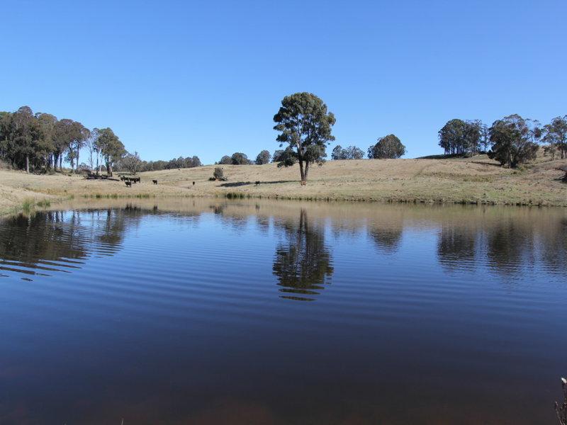 1693 Nowendoc Road, Niangala, NSW 2354