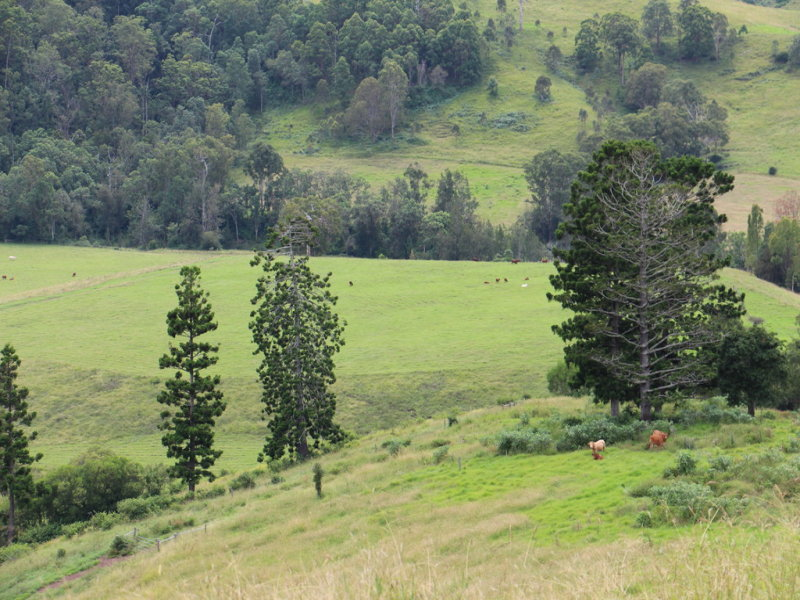 2007 Running Creek Rd, Running Creek, Qld 4287