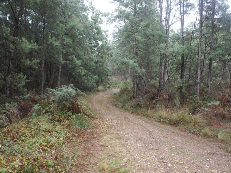239  Wadley's Road, Reedy Marsh, Tas 7304