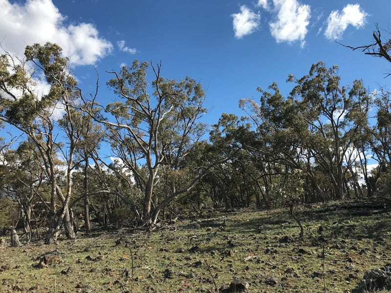 87, The Snowy River Way, Maffra, NSW 2630