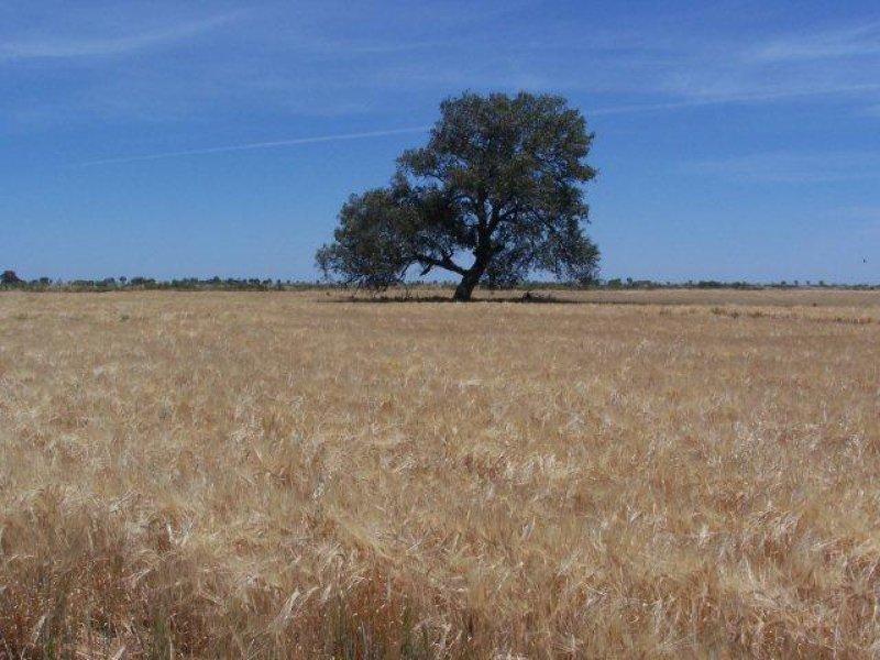 . Farm 573, Coleambally, NSW 2707
