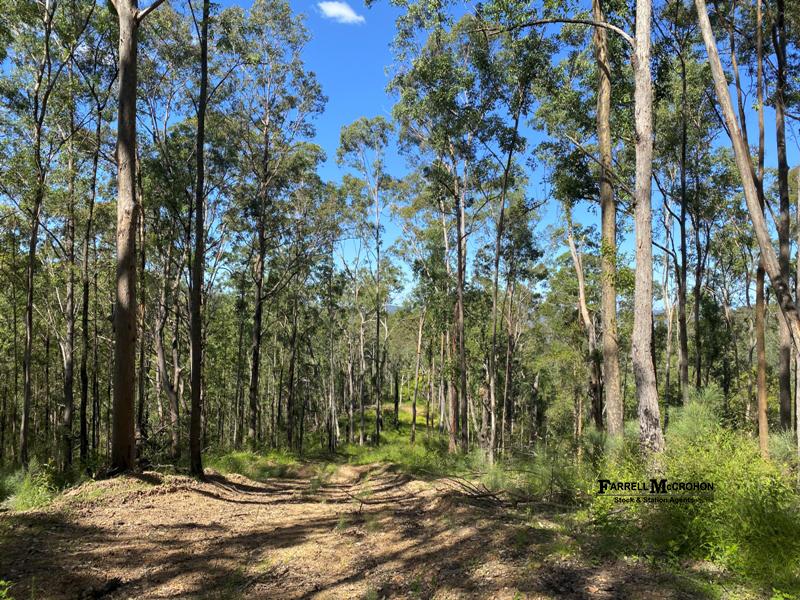 534 Cangai Road, Jackadgery, NSW 2460
