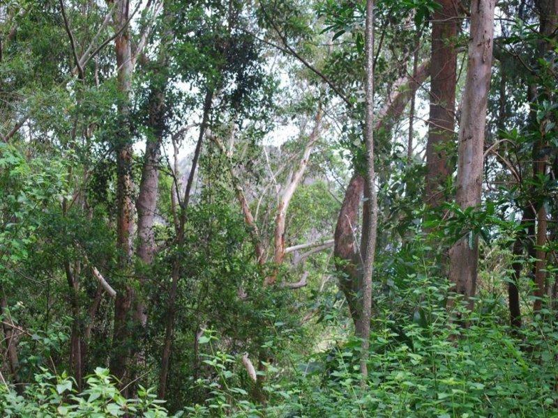822 Commissioners Creek rd, Commissioners Creek, NSW 2484