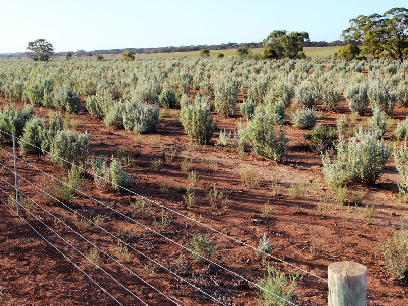 Lot 315 Bower Road, Australia Plains, SA 5374