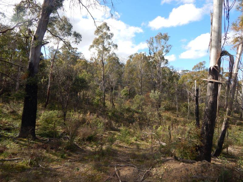 Lot 86 Countegany Road, Countegany, NSW 2630