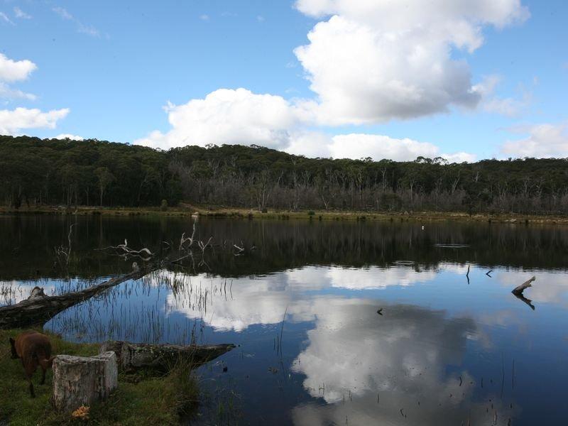 189 Warra Forest Road, Mount Mitchell, NSW 2365
