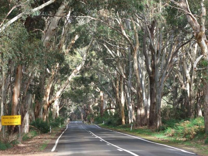 Section 36 Playford Highway, Cygnet River, SA 5223