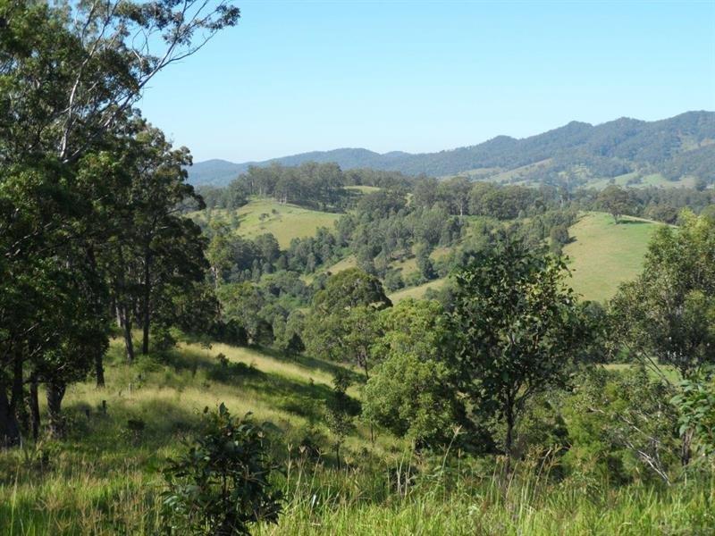1029 Little Bunyah Rd, Bucca Wauka, NSW 2429