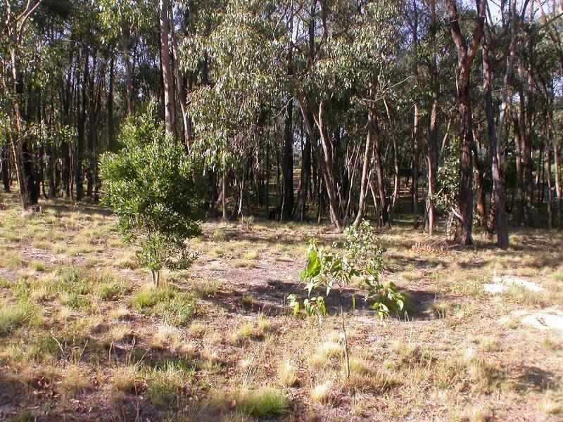 Lot 100 Cowans Drive, Dales Creek, Vic 3341