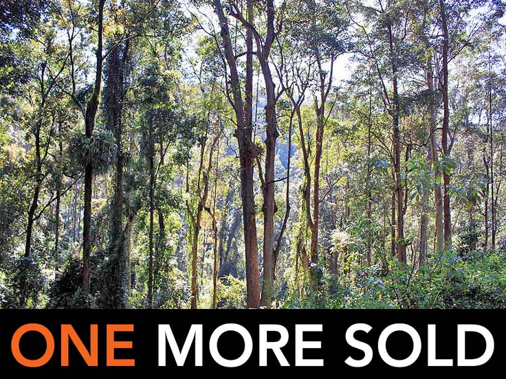 Lot 20 Toorumbee Road, Moparrabah, NSW 2440