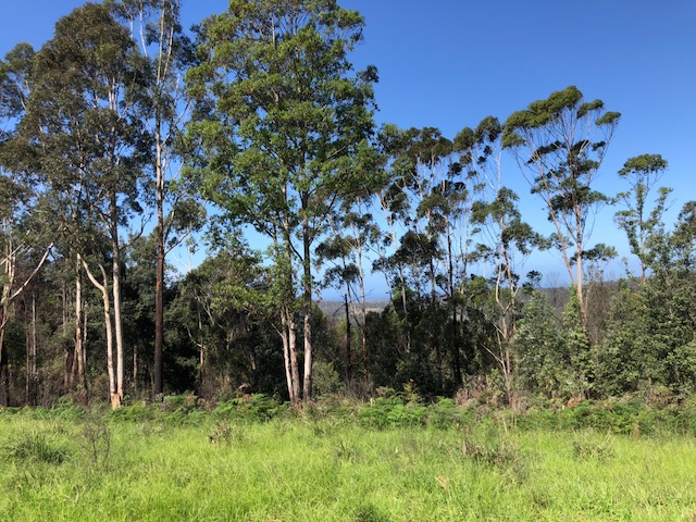 115, Monkey Mountain Road, Morton, NSW 2538