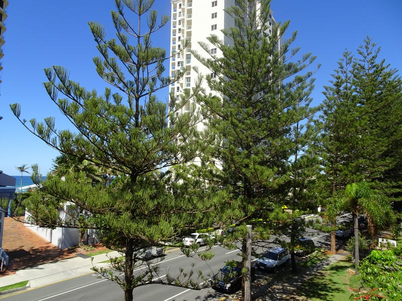 61-63  Old Burleigh Road, Surfers Paradise