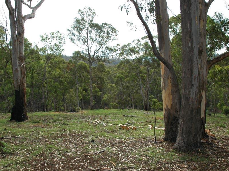 L241 Florabunda Lane, Nethercote, NSW 2549