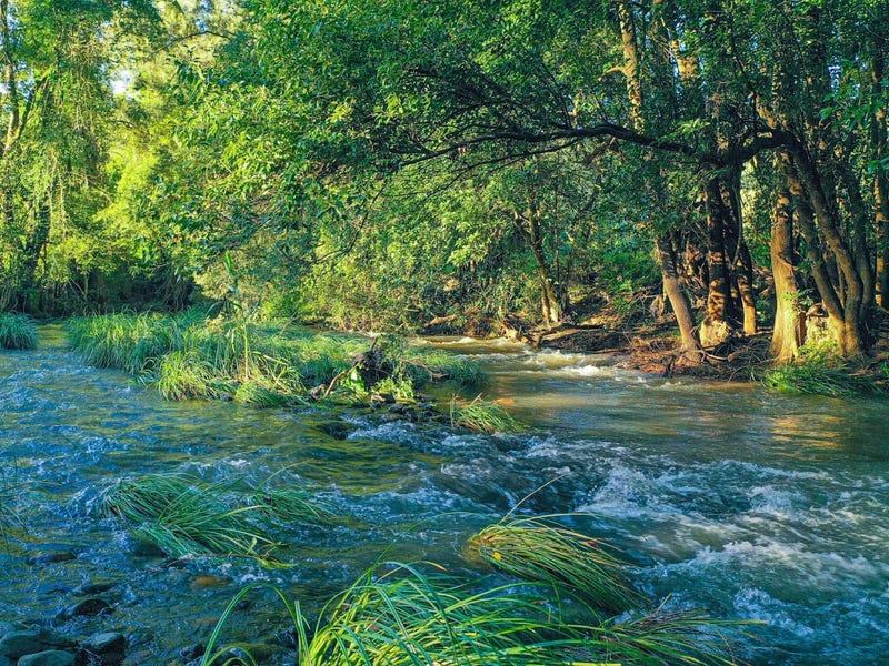 499 Horseshoe Creek Road, Upper Horseshoe Creek, NSW 2474