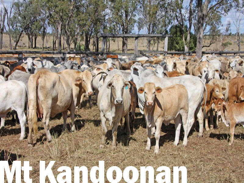 """Mt Kandoonan"" Crowsdale-Camboon Road, Theodore, Qld 4719"