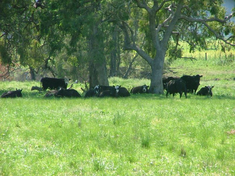 KILDARE, Merriwa Road, Willow Tree, NSW 2339