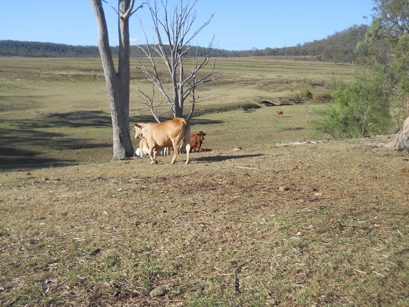 Rural properties for Sale in Darling Downs, QLD Pg  6