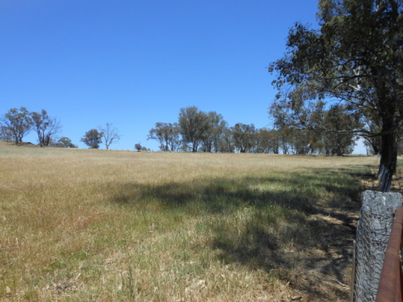 11 Cummins Road, Murringo, NSW 2586