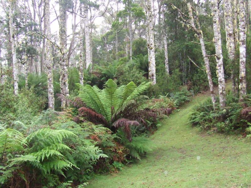 Lottah Road, Lottah, Tas 7216