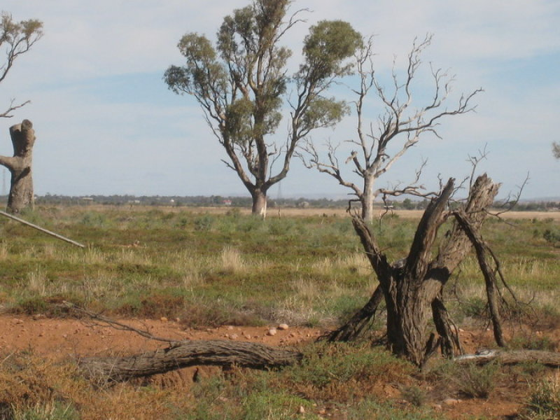 Lot 13, Lot 13 Gulf View Road, Napperby, SA 5540
