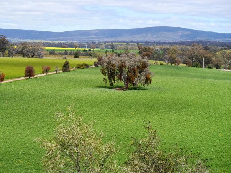 1628 Lachlan Valley Way, Cowra, NSW 2794