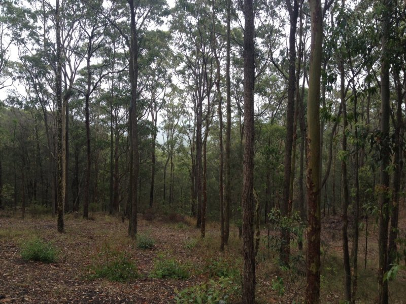 Lot 11 Duns Creek Road, Duns Creek, NSW 2321