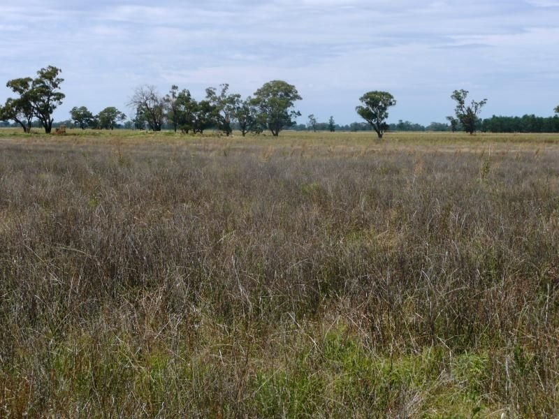 1 Burnewang Road, Corowa, NSW 2646