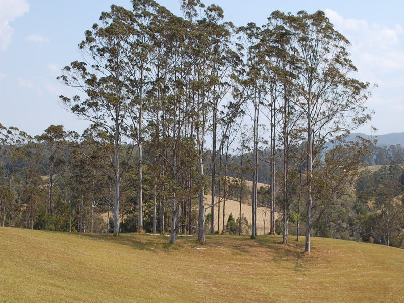 3, 624  Wards Road, Utungun, NSW 2447