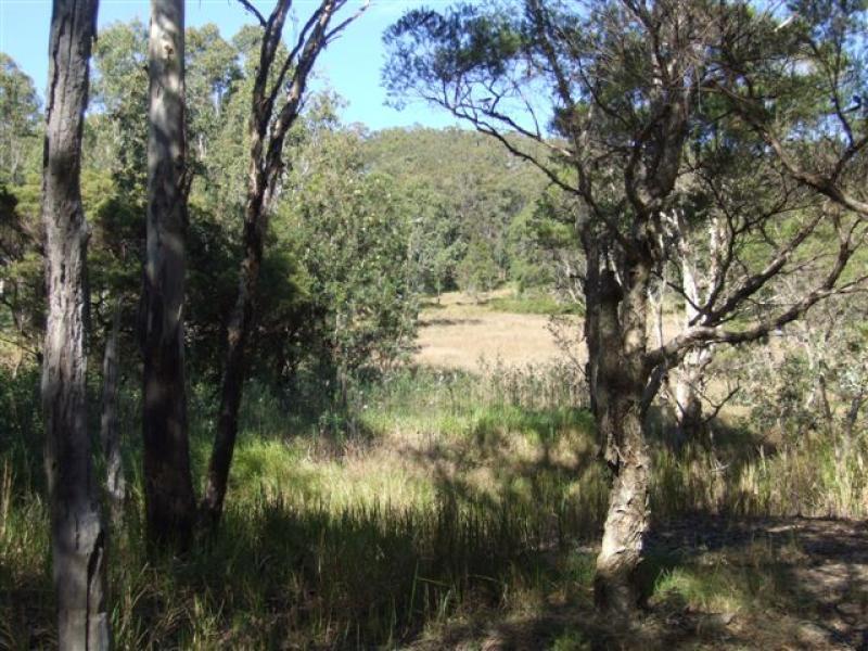 Lot 251 Armidale Road, Blaxlands Creek, NSW 2460